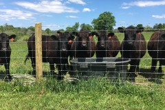 Cattle-Bottom-Water-Fence