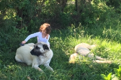 Gallery-Girl-Kangal-Dogs